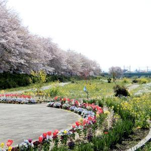 今日は河川敷公園をお散歩