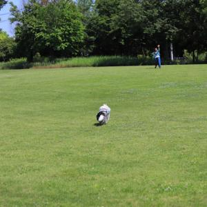 芝生公園と紫陽花散歩