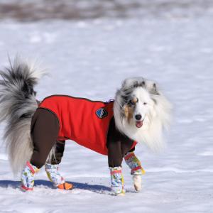今シーズンの雪遊びは?