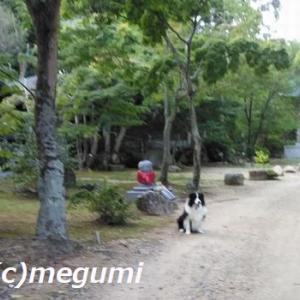 暑いので、夕がた散歩に山のお寺にブーブー散歩だったv・。・V わん♪