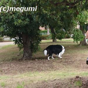 スマホを忘れてブーブー散歩に、娘がスマホで写してくれたムギです