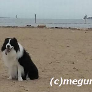 今日はムギの診察日。帰りに護岸工事の終わった芦屋浜でお散歩