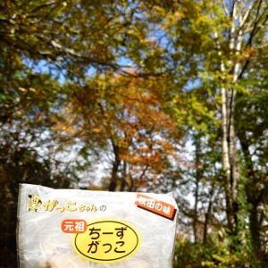 2021/10/17 白神山地 紅葉巡り(田代岳) 4-3