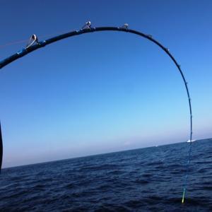 冬マダイ釣りはコシが命!!【ロッドのお話】。