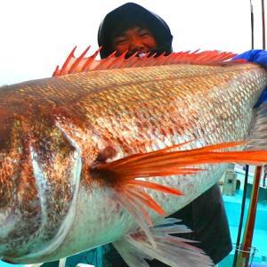 ついに今年も乗っ込みマダイの巨大魚群襲来? 船中記録更新級の爆釣でした。