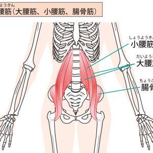 腸腰筋の解剖と腰・骨盤に与える影響について