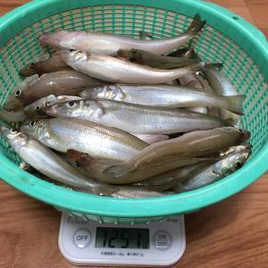 三重県 町屋海岸釣行