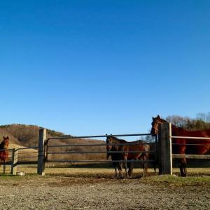 【北海道】日高の馬小屋で火事 逃げ遅れた三頭が肉になった模様