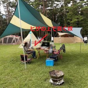 今年も来たぞキャンプ場。