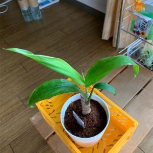 ダイソーで購入した植物は元気なのか?!