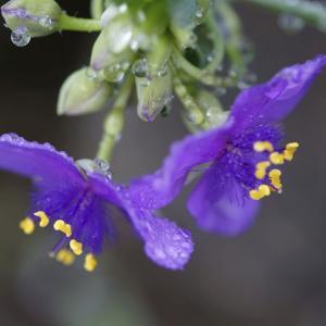 花を咲かせる内的な歓びと美の性質を知る