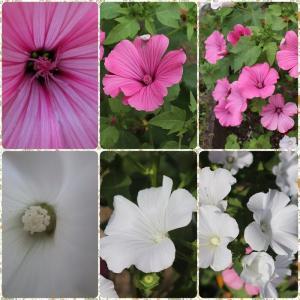 終り掛けの花と秋の実