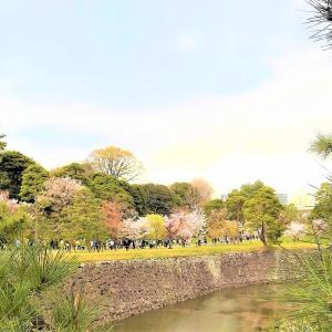 春季皇居乾通り一般公開に行きました