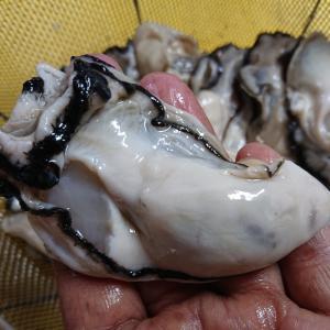 牡蠣♬*゚