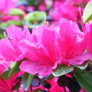 お花と丸ちゃん(艸*>∀<*∞)