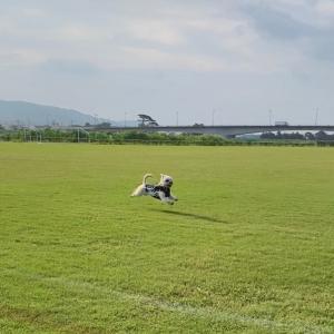 丸ちゃん夏2020走る編
