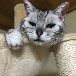 最近のにゃんこ&お寿司【猫 記事】