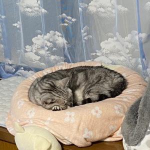 久しぶりに更新( ̄▽ ̄;)【猫写真有り】