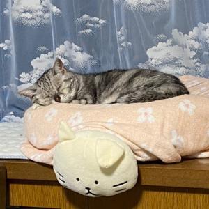 昨日よりは...【猫写真有り】