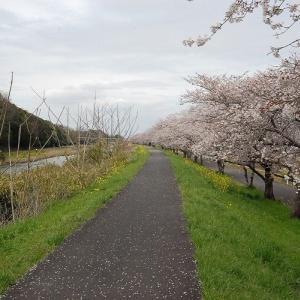 五行川のさくら並木
