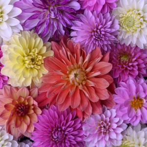 岡寺の花手水と紫陽花