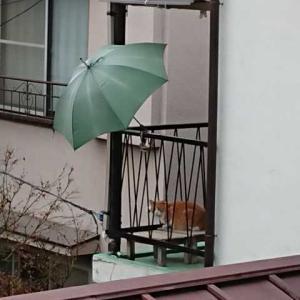 東京のネコ・・・