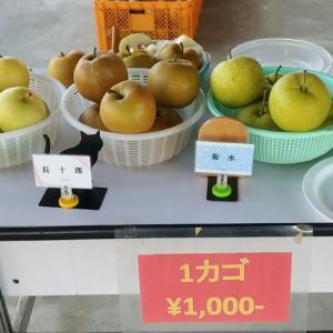 プチ君と利府の梨を買いに行きました