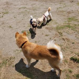 小型犬エリア