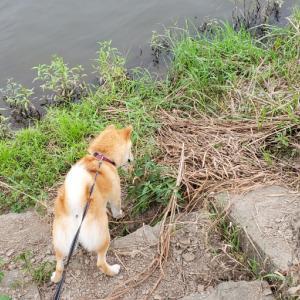 川辺で遊ぶ