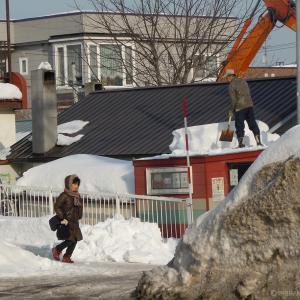 札 幌 残 雪