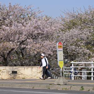南樽駅に万朶の花が咲き乱れる