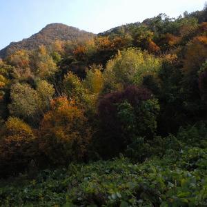【 札幌も、秋   #1】