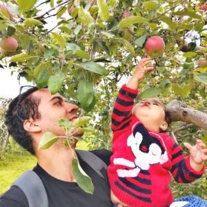 夏から秋へ、モントリオールはりんご狩りの季節