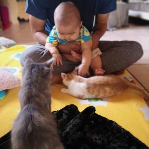 まるでムツゴロウさん!猫ちゃん達に愛されるおハゲ