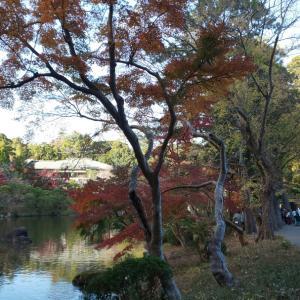 紅葉狩り2020@成田山公園