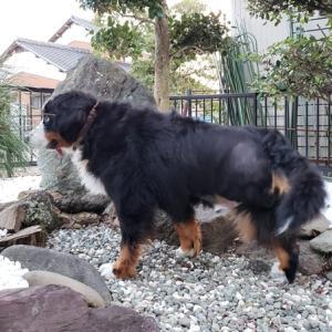 骨髄抑制とペット保険