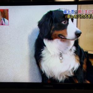 COVID-19私たちにできること~大型犬の医療費~
