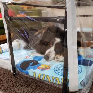 【大型犬の介護】酸素室