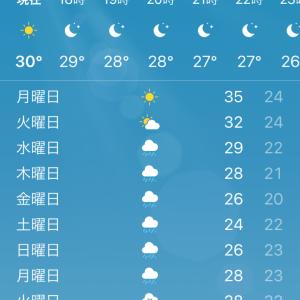 明日 猛暑日予報発令!!