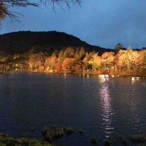 茶臼山高原の紅葉