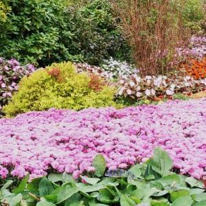 秋の花が美しい花公園へ~