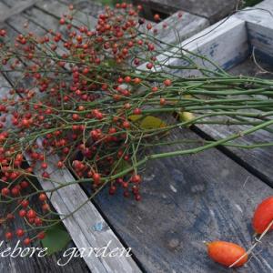 秋の景色 ネコさんのお庭へ~~