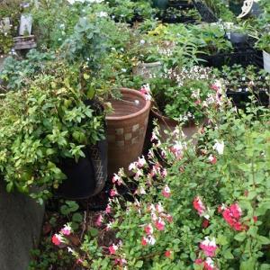 """""""記憶に残しておきたい花の庭。""""を、再び~"""
