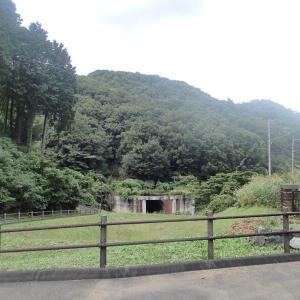 コスモスの道(龍崖山)。