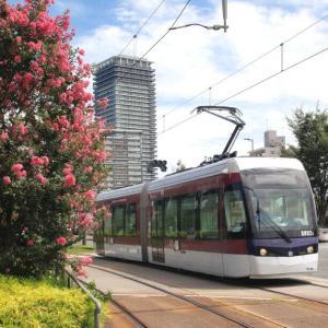 熊本市交通局 百日紅の花と市電