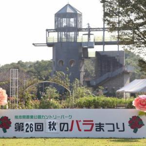 熊本県農業公園「第26回秋のバラまつり」