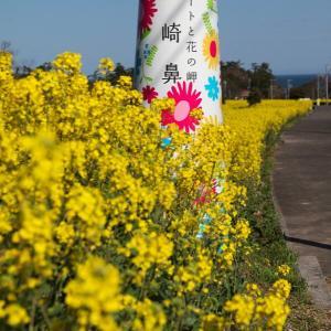 長崎鼻リゾートキャンプ場 菜の花フェスタ