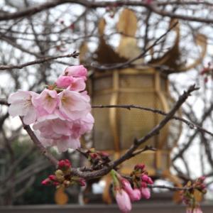やまが桜園と温泉でくつろぐ