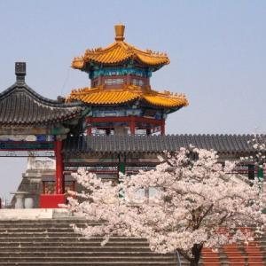 有朋の里 泗水孔子公園の桜
