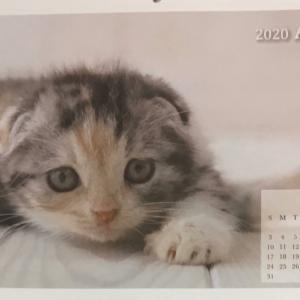 ニャンコカレンダー 明日から4月